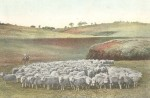 A Muster on a Sheep Run (from The World Reader, 1910s)